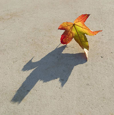 Photograph - Shadow Of A Leaf by Pixie Copley