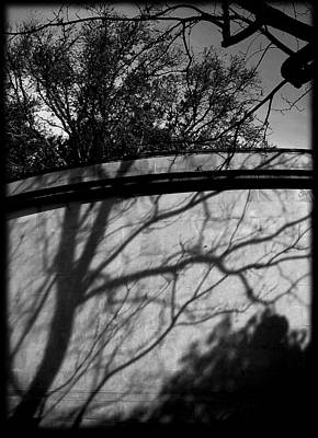 Black Is Beautiful Photograph - Shadow Of A Tree by Colleen Kammerer