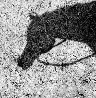Photograph - Shadow Of An Arabian by Pam Kaster