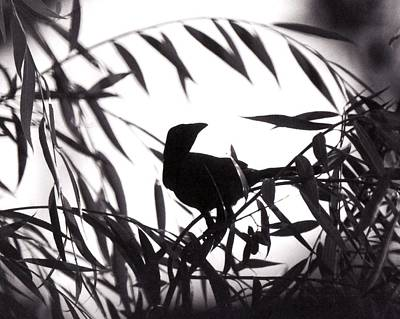 White Birds Photograph - Shadow Of The Crow by Jai Johnson