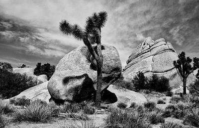 Photograph - Shadow On Boulder Joshua Tree by Sandra Selle Rodriguez
