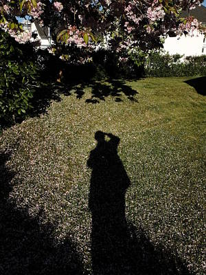 Photograph - Shadow On Lawn Ornamental Cherry Tree Blossoms by Martin Stankewitz