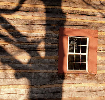 Photograph - Shadow On The Logs by David Arment
