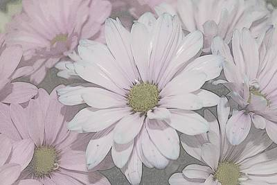 Photograph - Shadow Pink Daisies by Classically Printed