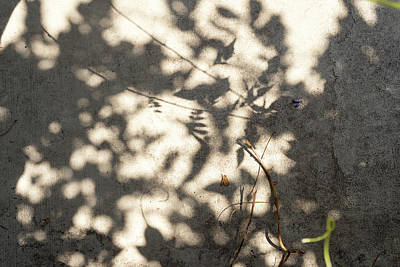 Photograph - Shadow Play Curly Q by Sharon Popek