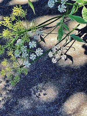 Photograph - Shadow Play by Renee Marie Martinez