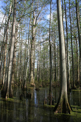 Photograph - Shadow Swamp by Dylan Punke
