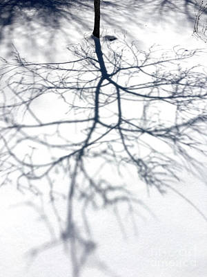 Photograph - Shadow Tree by Greg  West