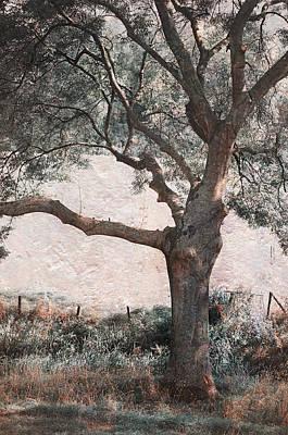 Shadow Tree Print by Jenny Rainbow