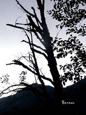 Photograph - Shadow Tree by Sadie Reneau