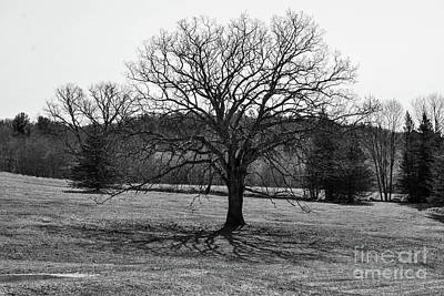 Photograph - Shadow Tree by Terri Oberg