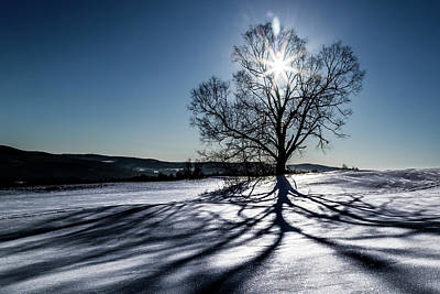 Photograph - Shadow Tree by Tim Kirchoff