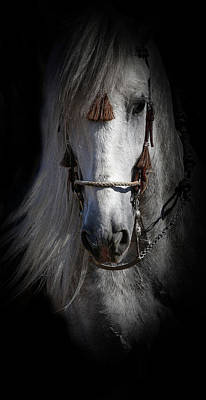 Photograph - Shadowed Andalusian  by Athena Mckinzie