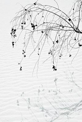 Photograph - Shadowed Branch by Glennis Siverson