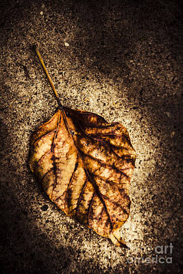 Shadowed Leaf From Autumns Fall Art Print