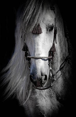 Photograph - Shadowed Stallion by Athena Mckinzie
