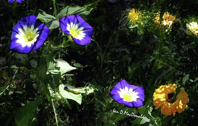 Photograph - Shadows And Flowers by Ian  MacDonald