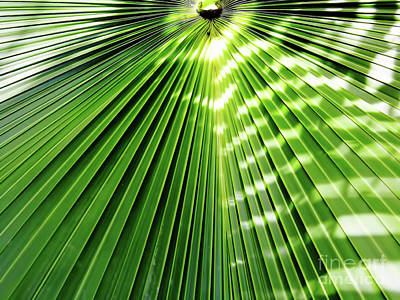Photograph - Shadows And Light On The Palm Frond by D Hackett