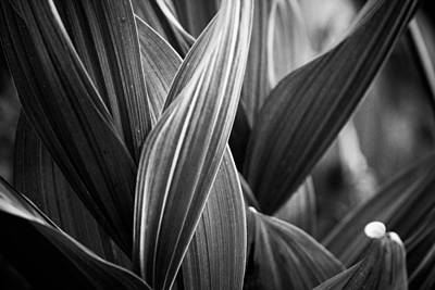 Photograph - Shadows And Lines by John McArthur
