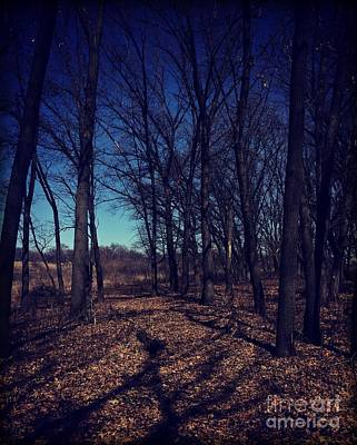 Frank J Casella Royalty-Free and Rights-Managed Images - Shadows and Trees Landscape by Frank J Casella