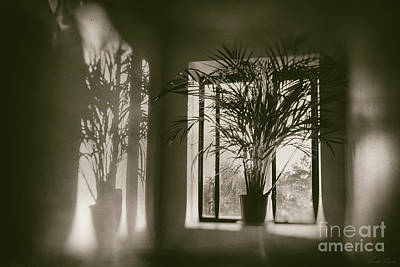 Photograph - Shadows Dance Upon The Wall by Linda Lees