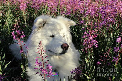 Yukon Wildflowers - Shadows by Fiona Kennard
