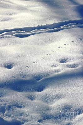 Photograph - Shadows In The Snow by Karen Adams