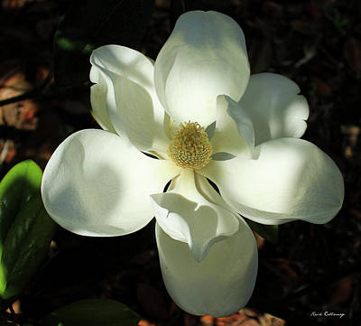 Photograph - Shadows Of Beauty Magnolia Flower Art by Reid Callaway