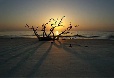 Jekyll Island Photograph - Shadows Of Driftwood by Greg Mimbs