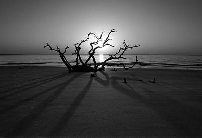 Photograph - Shadows Of Driftwood In Black And White by Greg Mimbs