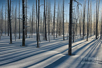 Shadows Of The Forest Art Print by Sandra Bronstein