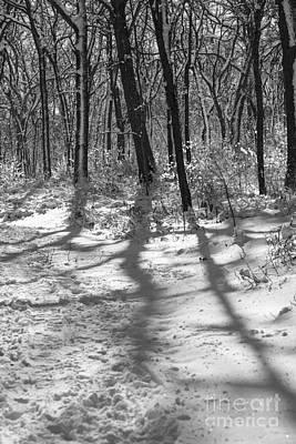 Photograph - Shadows Of The Morning by David Bearden