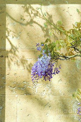 Garden Flowers Photograph - Shadows Of Wisteria by Tim Gainey