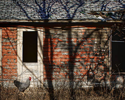 Photograph - Shadows - Old Farmhouse - Hen by Nikolyn McDonald