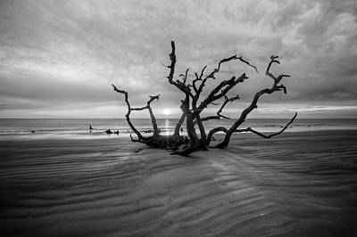 Photograph - Shadows On Driftwood Beach Black And White by Debra and Dave Vanderlaan