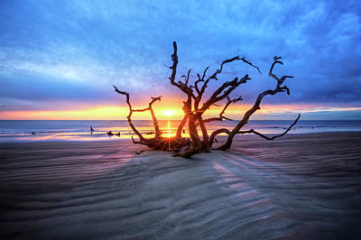Photograph - Shadows On Driftwood Beach by Debra and Dave Vanderlaan