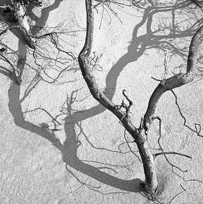 Photograph - Shadows On The Sand by Charles Harden