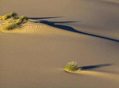 Photograph - Shadows On The Sand by Robert Potts