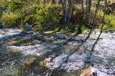 Digital Art - Shadows On The Stream by Glenn McCarthy Art and Photography
