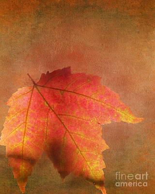 Shadows Over Maple Leaf Art Print