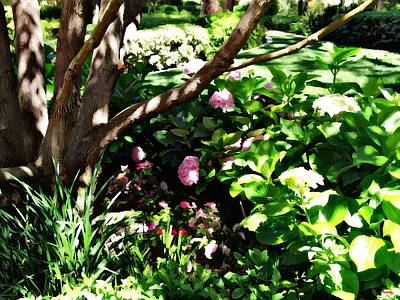 Photograph - Shadows Through The Garden by Glenn McCarthy Art and Photography