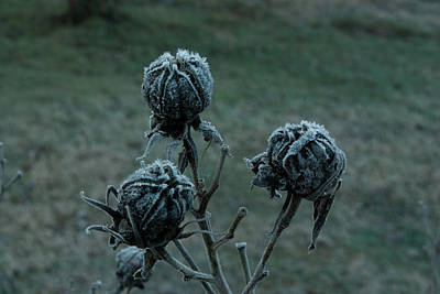 Shadowy Frozen Pods From The Darkside Art Print by Douglas Barnett