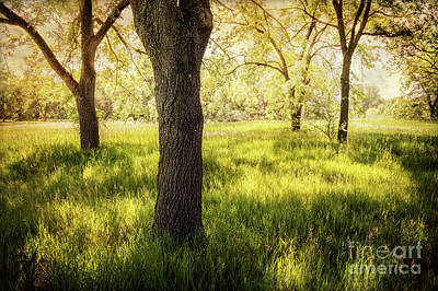 Photograph - Shady Grove by John Anderson