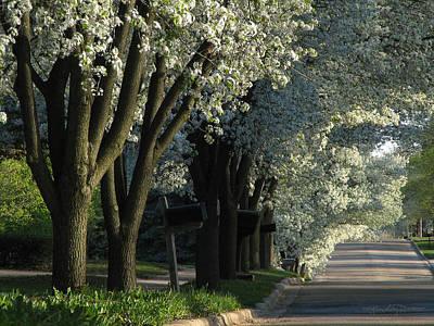 Photograph - Shady Grove by Karen Casey-Smith