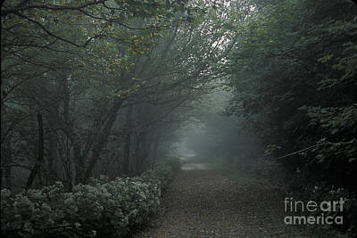 Photograph - Shady Lane by Stan and Anne Foster
