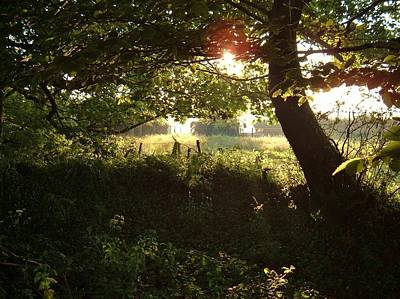 Photograph - Shady Nook by Richard Brookes
