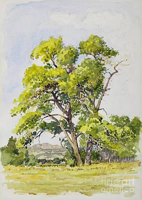 Shady Oak Tree Art Print by James Robert MacMillan