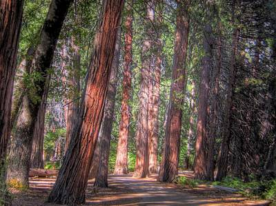 Large Tree Photograph - Shady Path by Jane Linders