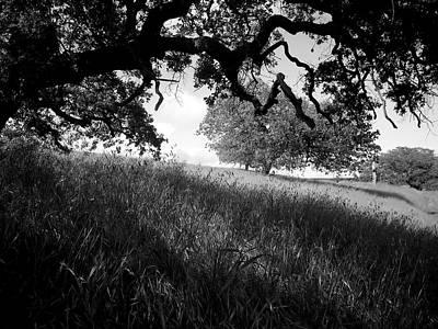 Photograph - Shady Spot by Robert Ball
