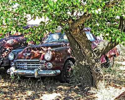 Walnut Tree Photograph - Shady Stude Photo by David King